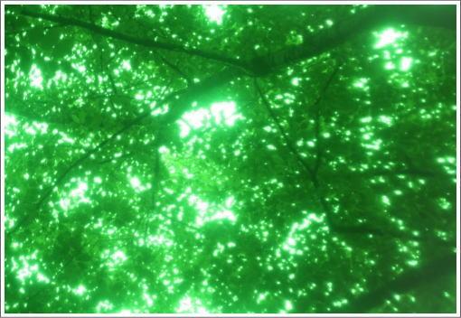グリーングリーン.jpg