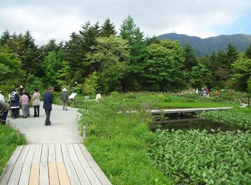 箱根湿性花園.JPG