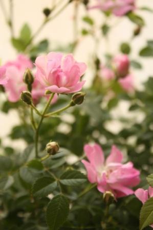 花!.jpg